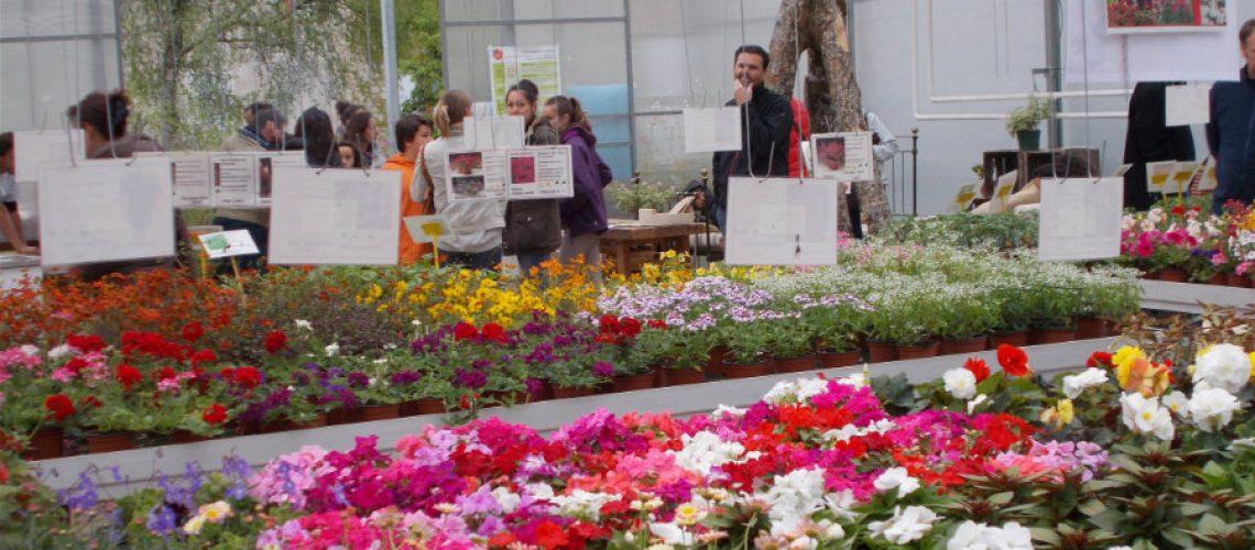 011-vente-production-serres-fleurs-plantons-semis-ferme-de-chosal
