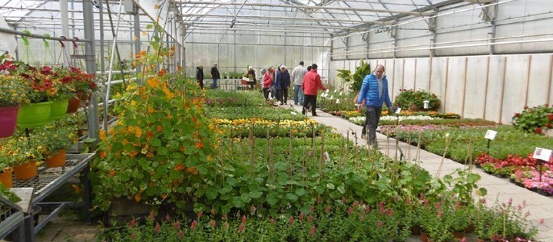 ferme-chosal-serres-production-fleurs-vente-horticulture