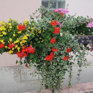 planton_fleur_003_ferme_de_chosal