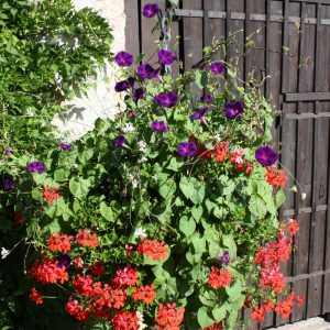 planton_fleur_004_ferme_de_chosal