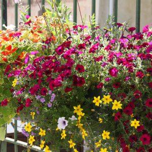 planton_fleur_006_ferme_de_chosal